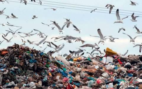 Τρίπολη: Σε κατάσταση έκτακτης ανάγκης ο δήμος λόγω των σκουπιδιών