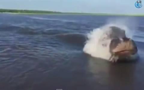 Μποτσουάνα: Ο… ενοχλημένος ιπποπόταμος πήρε στο κατόπι τους τουρίστες (video)