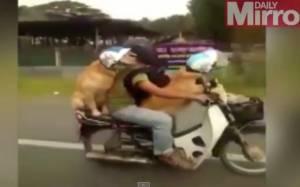 Τετράποδοι easy riders (video)