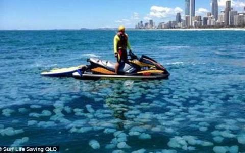 Εκατοντάδες χιλιάδες μπλε μέδουσες σε παραλία της Αυστραλίας (vid & pics)