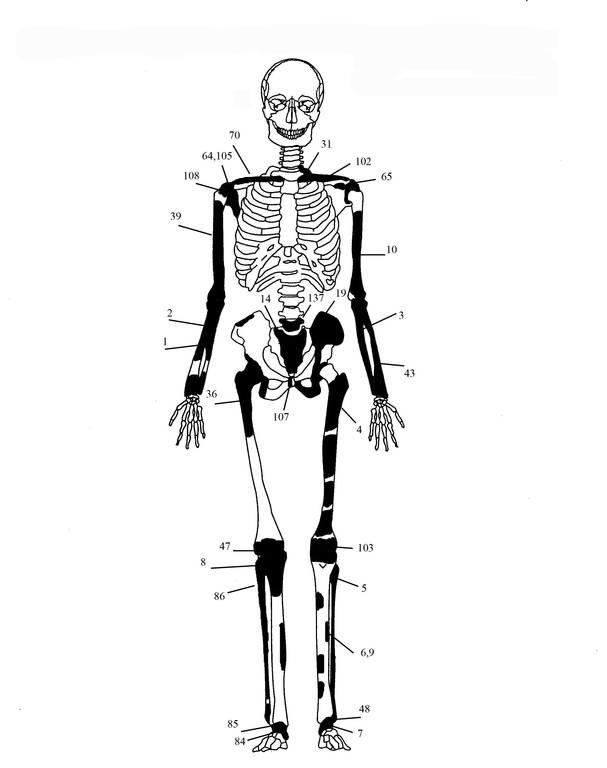Αμφίπολη: Συγκλονιστικές φωτογραφίες - Πέντε τελικά οι σκελετοί! (pics)