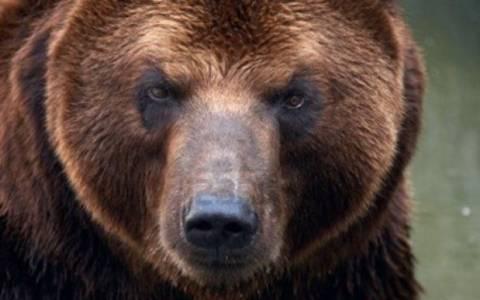 Καστοριά: Νεκρή αρκούδα σε τροχαίο (Pic)