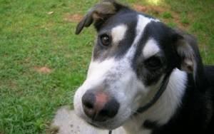 Εύβοια: «Καμπάνα» ύψους 30.000€ για θανάτωση σκύλου