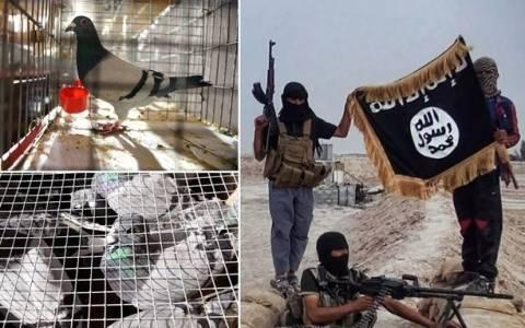 Ισλαμικό Κράτος: Θανάσιμο χόμπυ - Εκτελούνται όσοι εκτρέφουν περιστέρια