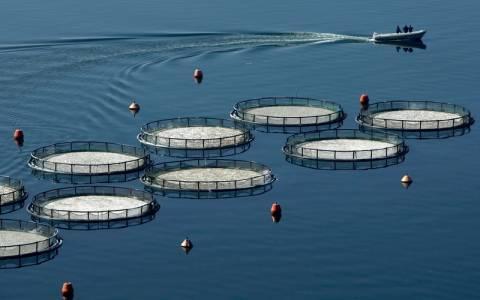 Κάλυμνος: Εντοπίστηκε παράνομη μονάδα ιχθυοκαλλιέργειας
