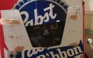 Οι γάτες ξέρουν να κρύβονται (photos)