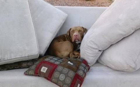 Περίσσευε ο σκύλος στην μετακόμιση και τον παράτησε!
