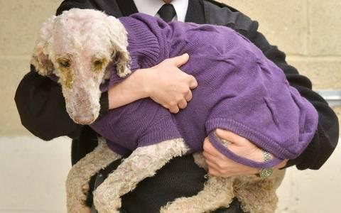 Η απίστευτη μεταμόρφωση εννιά σκυλιών – δείτε πώς ήταν και πώς έγιναν (pics)
