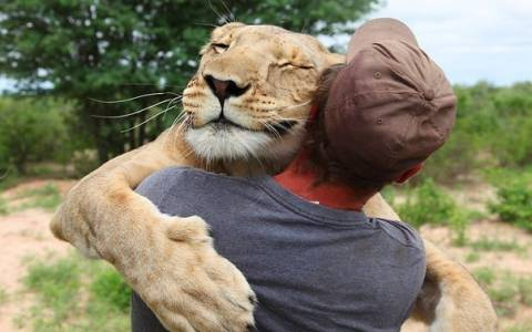 Απίστευτο: Λιονταρίνα αγκαλιάζει τον άνθρωπο που την έσωσε (video)