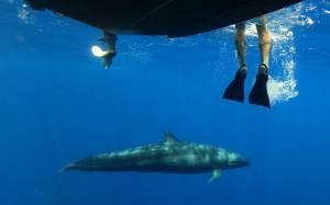 Για κολύμπι με… «θαλάσσιους γίγαντες»