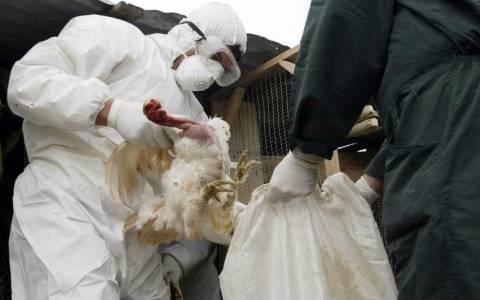 Βουλγαρία: Κρούσμα της γρίπης των πτηνών