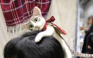 Ιαπωνία: Aξεσουάρ μαλλιών ή μια γάτα στο κεφάλι σας (photos)