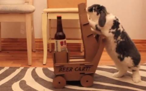 Ενα κουνέλι φέρνει... μπύρες