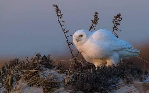 Αγρια φύση, μερικές από τις καλύτερες φωτογραφίες