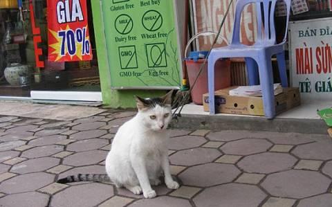 Βιετνάμ: Σώθηκαν χιλιάδες γάτες που προορίζονταν για το… μενού εστιατορίων!