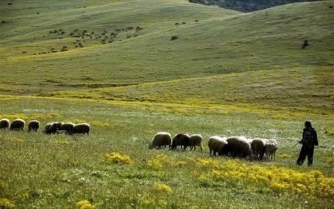 Σε συρρίκνωση οδηγείται τα τελευταία χρόνια η κτηνοτροφία στην Ήπειρο
