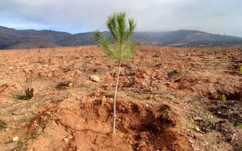 Κύπρος-Αρχίζει η εκστρατεία: «Ένα δέντρο για κάθε παιδί που γεννιέται»
