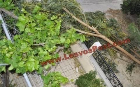 Κακοκαιρία-Λέσβος: Ξεριζώθηκαν δέντρα- «Λίμνη» έγινε ο παραθαλάσσιος δρόμος(vid)