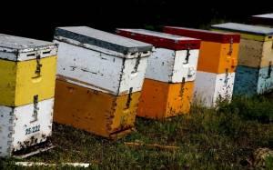 Συνελήφθη γιατί έκλεβε κυψέλες μελισσών