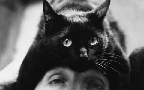 Γάτα καπέλο... και όχι δεν είναι υπονοούμενο (photos)