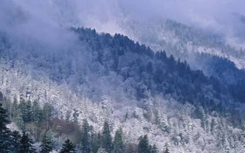 Θες να νιώσεις λίγο John Snow; Διακοπές στο δάσος