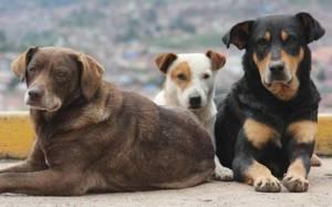 Αθώος κρίθηκε 40χρονος που συνελήφθη για θανάσιμο τραυματισμό σκύλου