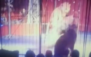 Αίγυπτος: Λιοντάρι επιτέθηκε σε θηριοδαμάστρια κατά τη διάρκεια σόου (video)