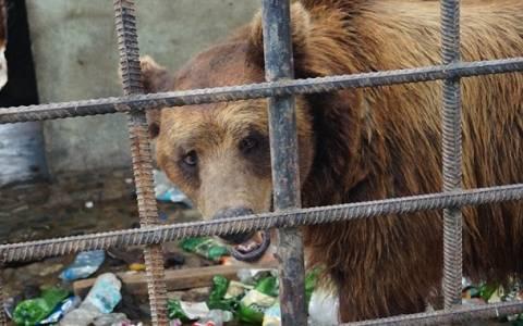 «Πότιζαν» τις αρκούδες αλκοόλ για να διασκεδάζουν θαμώνες εστιατορίου (vid & pics)