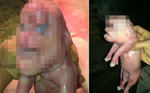 Κίνα: Γουρουνάκι με ανθρώπινο πρόσωπο και πέος στο μέτωπο! (photos)