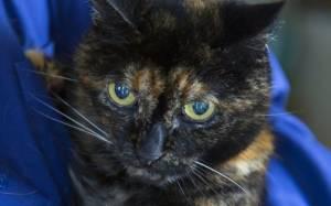 Αυτή είναι η πιο ηλικιωμένη γάτα στον κόσμο (photos)