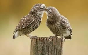 Αγάπη είναι... και για το ζωικό βασίλειο (photos)