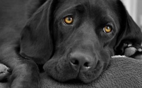Οι σκύλοι καταλαβαίνουν τη χαρά και τη λύπη σου