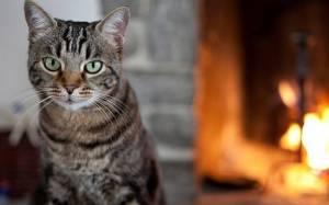 Ο ορισμός του «δεν με νοιάζει» σύμφωνα με τις γάτες (Video)