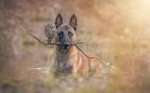 Ένας σκύλος και μια κουκουβάγια, φιλία κολάζ  (photos)