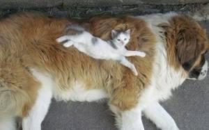 Σαν το σκύλο με τη γάτα (photos)