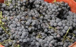 Με 32 τόνους κρασί θα γεμίσει το... συντριβάνι της Νάουσας