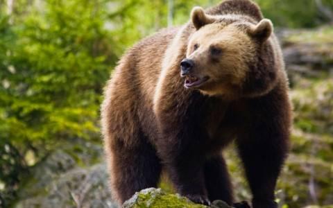 Βόλτα σε μονοπάτια με …αρκούδες