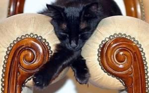 Γάτες αράζουν παραδειγματικά σε λάθος μέρη (photos)