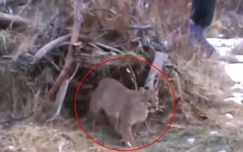 Η αλεπού αποδείχθηκε κάτι πολύ πιο… άγριο! (video)
