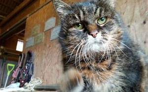 Η… γηραιότερη γάτα του πλανήτη πάει για Γκίνες!