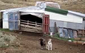 Ξάνθη: Επίδοξοι ληστές βρήκαν άδειο… το πορτοφόλι του κτηνοτρόφου