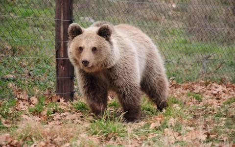Η Ζωή, το αρκουδάκι, πήρε... τον υπνάκο της και θα ξυπνήσει ελεύθερη