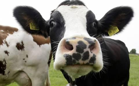Απειλή από την Τουρκία κινητοποιεί τους κτηνοτρόφους στον Έβρο