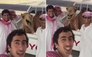 Καμήλα ξεκαρδίζεται στα γέλια με τους φίλους της! (video)