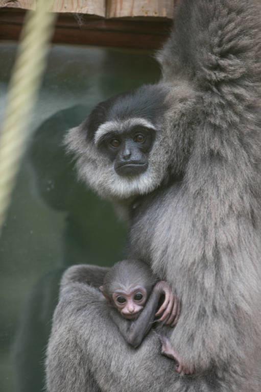 Οι καλύτερες φωτογραφίες της εβδομάδας από το ζωικό βασίλειο (Photos)
