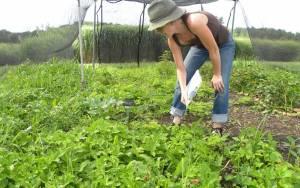 Επιμόρφωση αγροτών στην καινοτομία