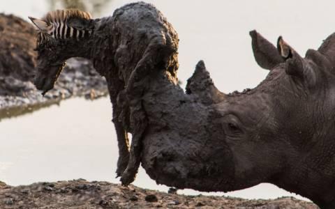 Η ομορφότερη και πιο θλιβερή «διάσωση» από την άγρια φύση (photos)
