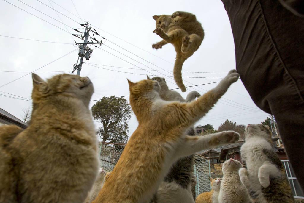 Ιαπωνία: Κατάληψη νησιού από… γάτες! (video & pics)