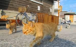 Ιαπωνία: Θα σας πικράνουμε αλλά υπάρχουν 11 νησιά με γάτες