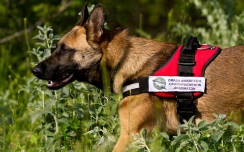 Δύο ειδικά εκπαιδευμένα σκυλιά εντοπίζουν δηλητηριασμένα δολώματα